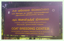 Goat Breeding Farms
